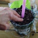 flower cupcake - stem placement