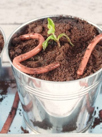 Jello worms in planter with dirt and plant (mint sprig)