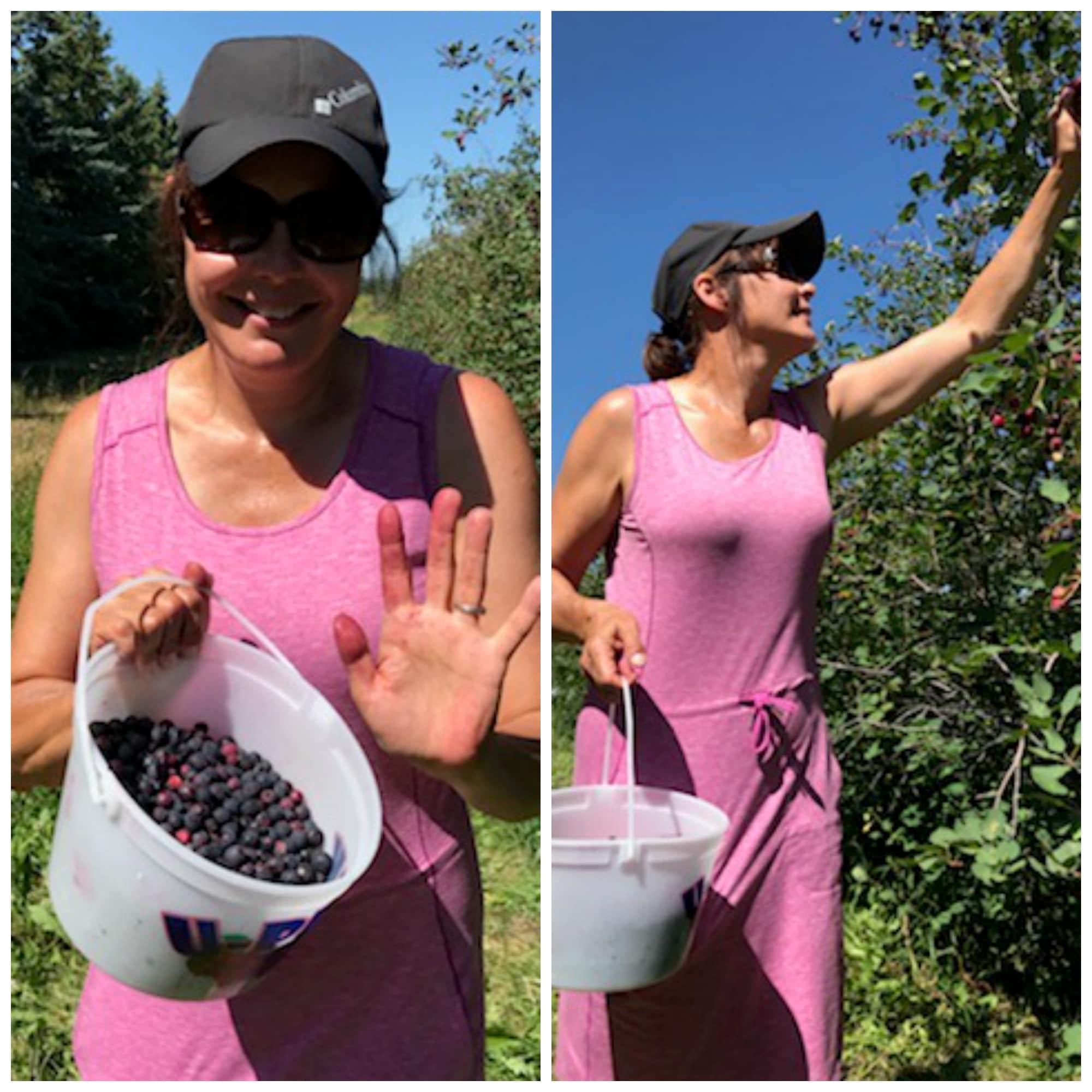 collage of me picking Saskatoon berries